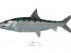 talbot-karen-bonefish