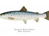 talbot-karen-landlocked-atlantic-salmon