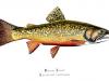 talbot-karen-maine-brook-trout