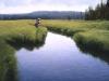 where-wild-trout-hide2