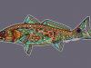 midcurrentandrealarkoredfish2