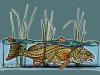 midcurrentredfishinthereedsandrealarko