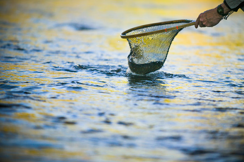 Experts midcurrent for Fly fishing houston
