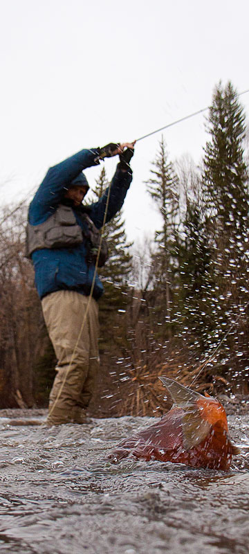 1000 images about fly fishing on pinterest fly for Crested butte fishing