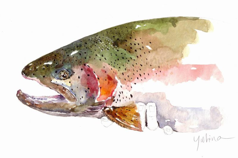 Mark yuhina midcurrent for Fish out of water watercolor