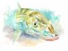 bonefish-18_x24_