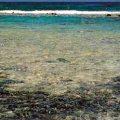 Rubble Flats and Sand Flats of the Tropics