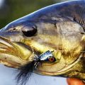 Surface Flies for Smallmouth