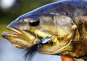 "Bob Clouser - ""Fly-Fishing for Smallmouth"""