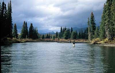 British Columbia Steelhead