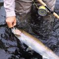Steelhead: Striking the Fish