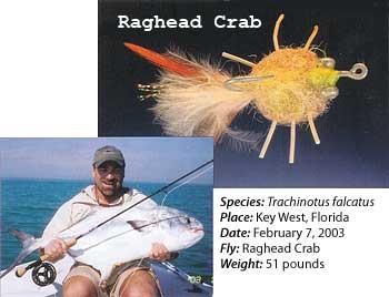 Raghead Crab Fly