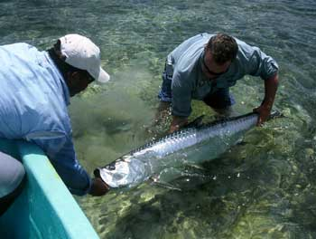 Belize Tarpon Fishing