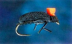Foam Beetle
