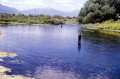 Midge Fishing