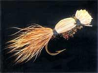 Cooper Bug