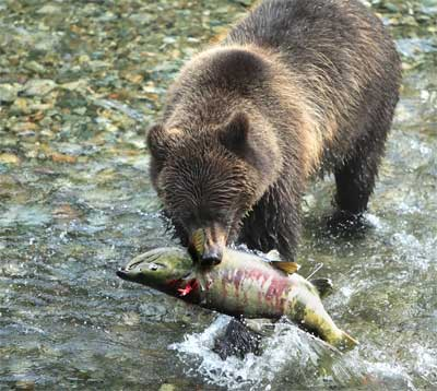 Bears and Fishing