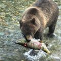 How to Recognize a Problem Bear