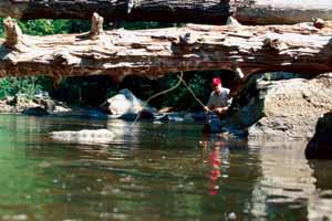 Trout Fishing Techniques