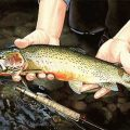 About That Hook: What Do Trout See?