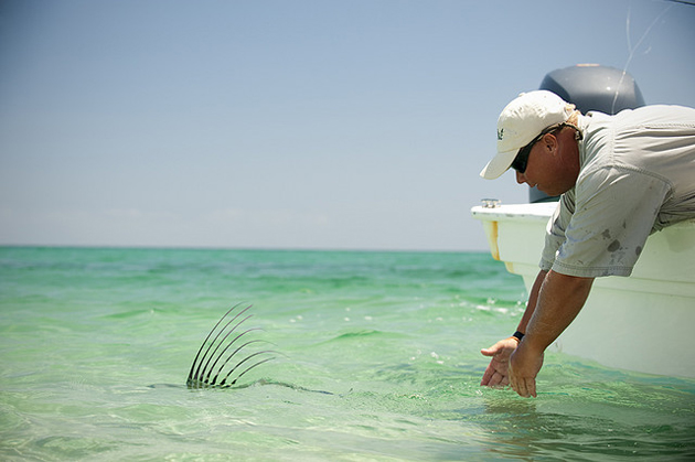 Fly Fishing Roosterfish