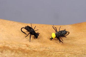 Beetle Patterns