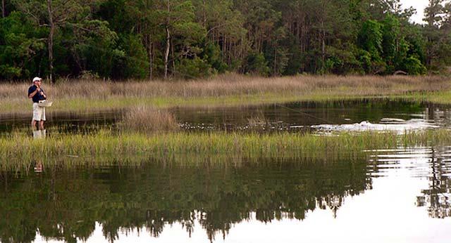 South Carolina Redfish or Red Drum