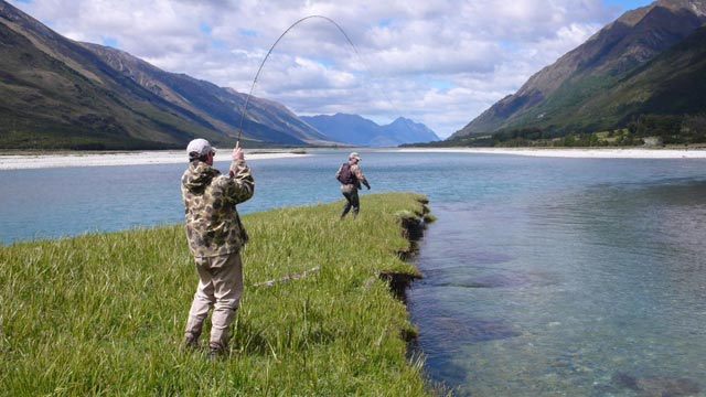 New Zealand Trout