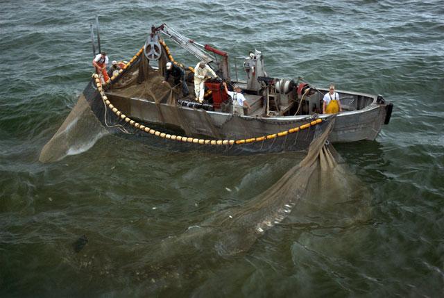 Menhaden Purse Seine Boat