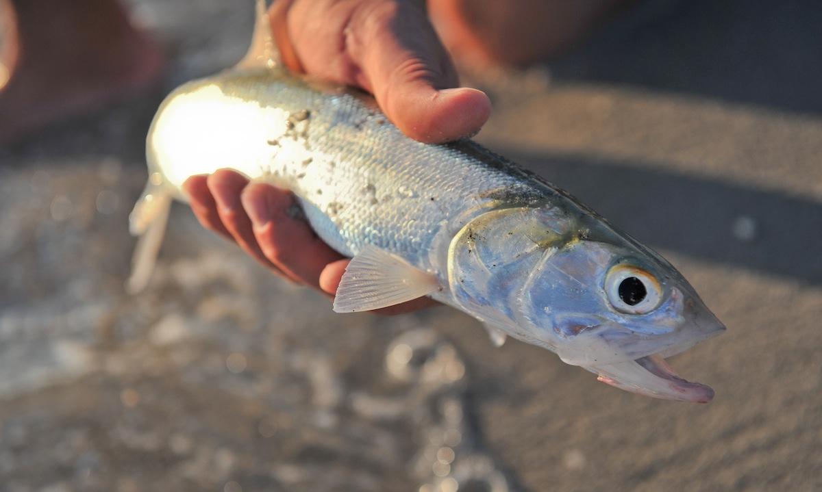 LadyFish1