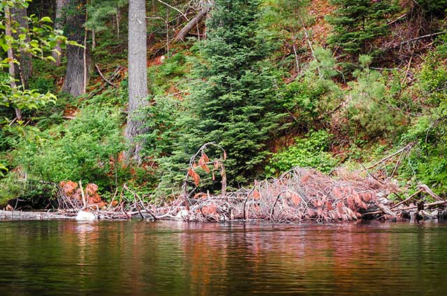 Fly Fishing Stories