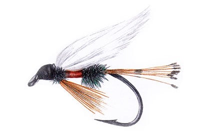Royal Coachman Fly Pattern History