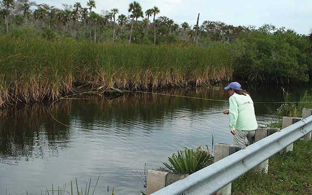 Diana Rudolph Fly Fishing Tamiami Trail