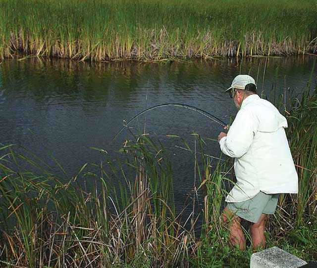 Fly Fishing for Snook Tamiami Trail