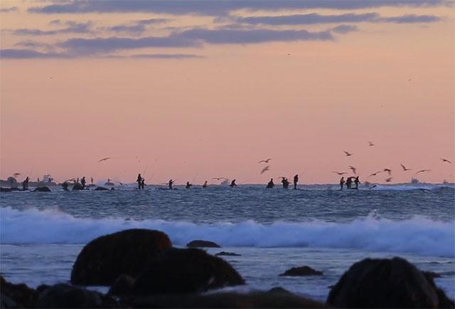 """Running the Coast"" Striper Film Jamie Howard"