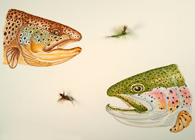 Choosing Flies for Trout