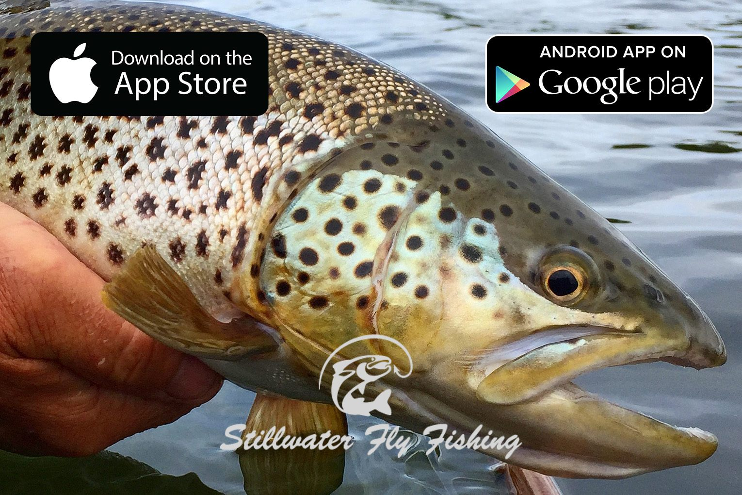 Stillwater fly fishing app is now live midcurrent for Fly fishing apps