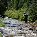 How to Land and Release Fish When Fly Fishing Alone