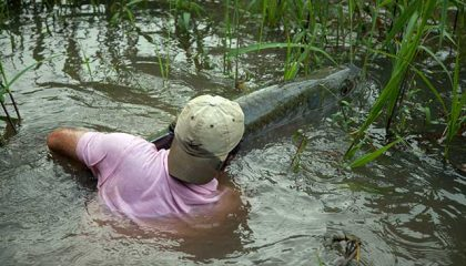 Giant Jungle Tarpon of Costa Rica