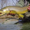 Tippets: Bryan Huskey Talks Keep 'Em Wet, Streamer Presentation
