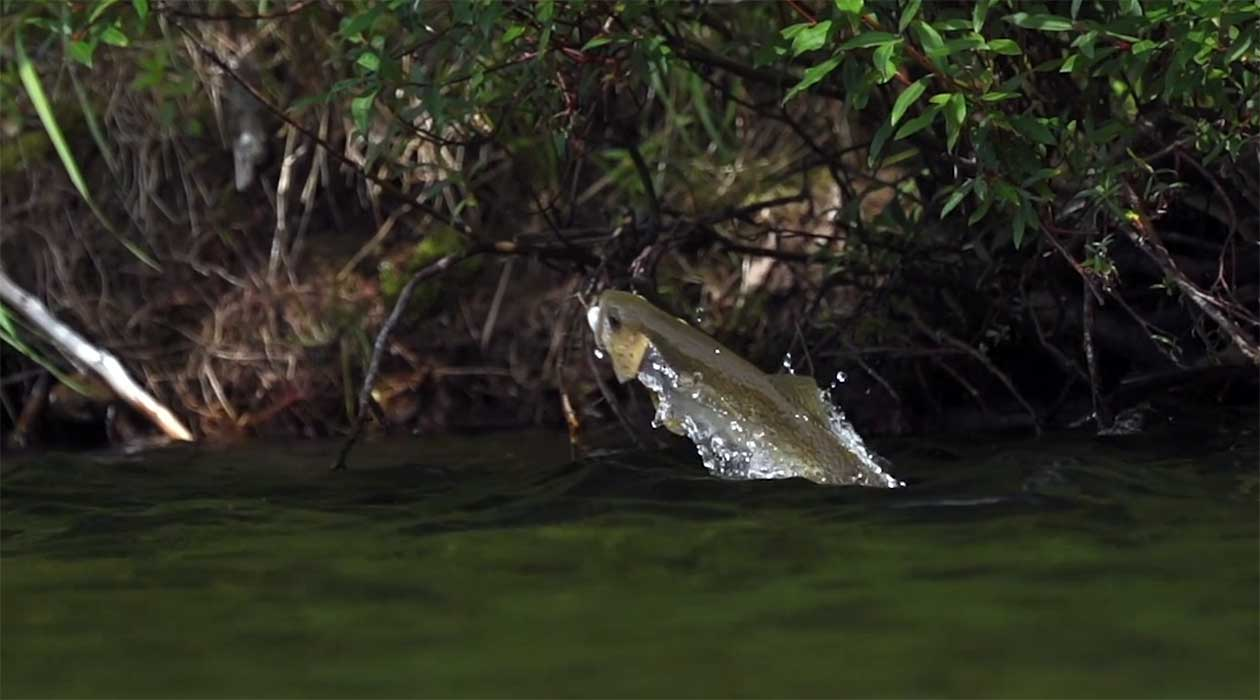 IF4 Sizzle Reel Fly Fishing