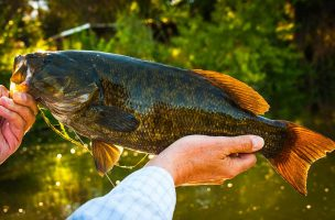 Top-Water Retrieves for Smallies