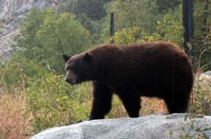 Tippets: Bear Minded in the Backcountry, Make Fewer False Casts