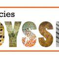 Dally's All Species Odyssey