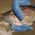 New Marine Skin Data Gathering Patch