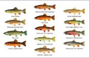 New Native Trout Challenge Kicks Off in 12 Western States