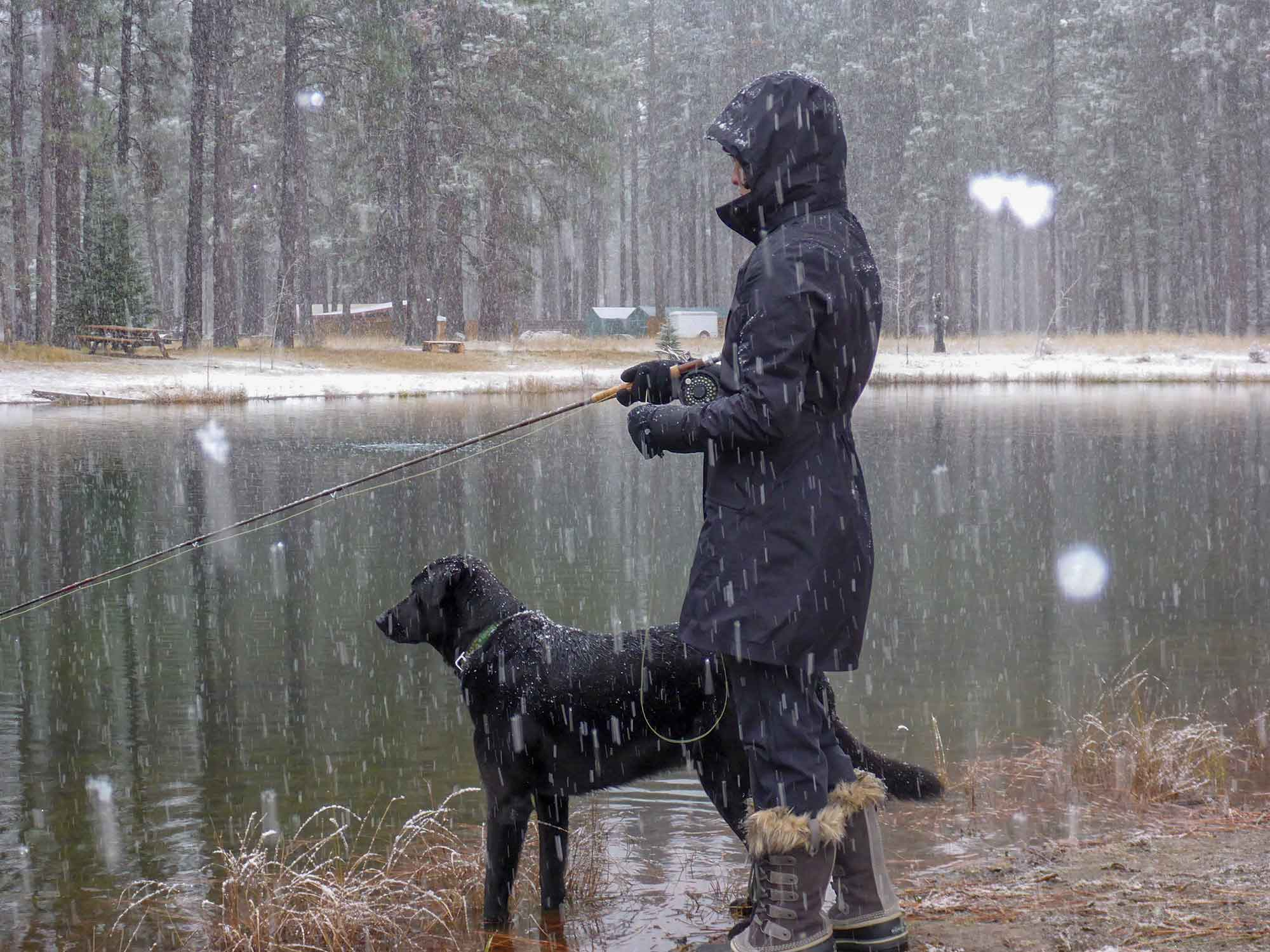 Fly Fishing Dogs
