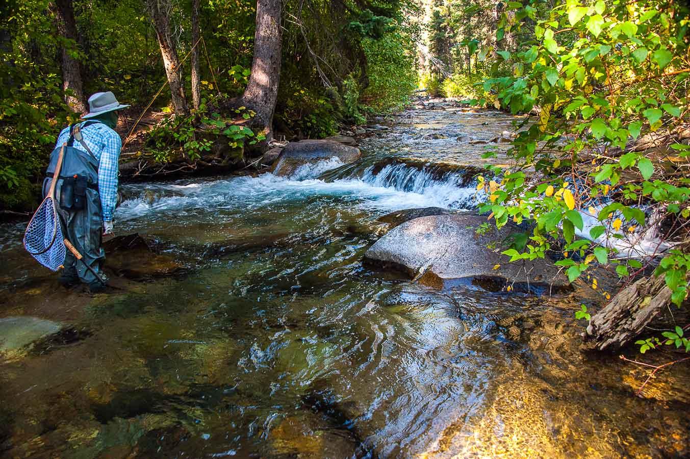 Fly Fishing Mountain Creeks