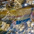 Making Do with the Wrong Fly Rod