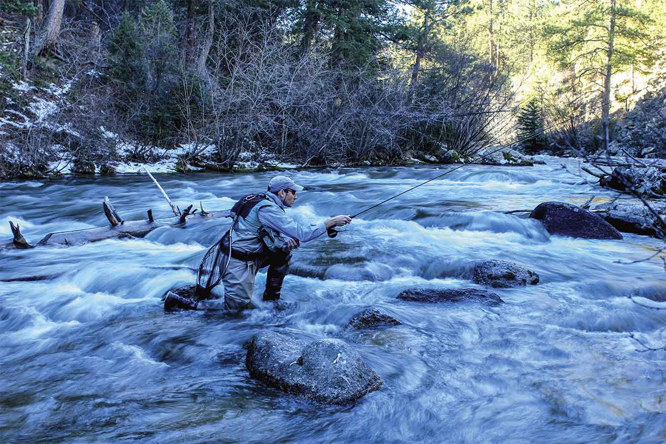 Fly Fishing Trout Vision